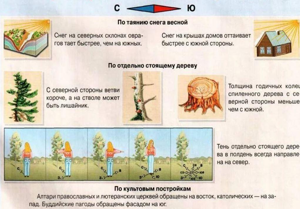 Определение сторон света по природным явлениям